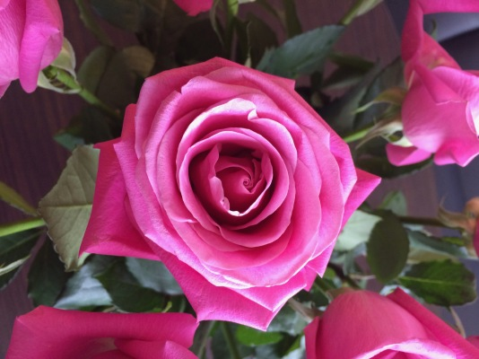 Valentine's Day (Pink roses are my fave), Feb. 2015